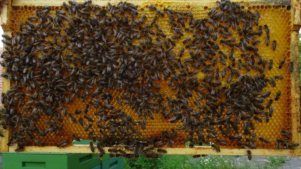 zweite Honigwabe