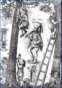 Waldimkerei der Zeidler